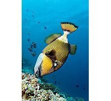 Divers Nightmare Photographic Print