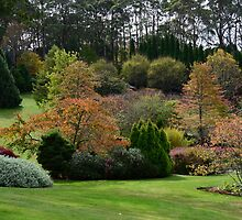 BISLEY GARDENS,  MOUNT WILSON,  NSW. by Phil Woodman