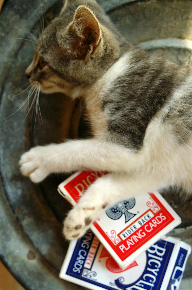 Card Playing Kitty by Tiffany Muff