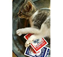 Card Playing Kitty Photographic Print