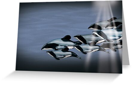 Maui Dolphins by Tiffany Muff