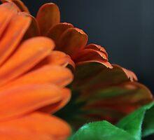 Orange Petals by Annie Underwood