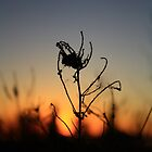Silhouette At Sunset by Tim Trott