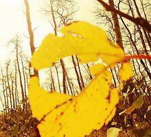 Fall in Colorado by Joshua578569