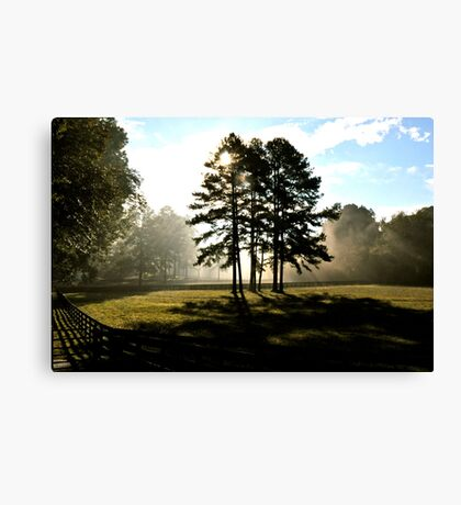 Sunbeams & 2 strong trees Canvas Print