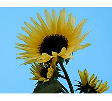 Blue Skies & Sunshine Photographic Print