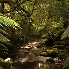 rivulet, st columba falls, northeast tasmania, australia by tim buckley | bodhiimages