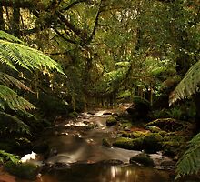 rivulet, st columba falls, northeast tasmania, australia by tim buckley | bodhiimages