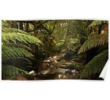 rivulet, st columba falls, northeast tasmania, australia Poster