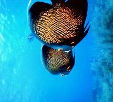 Underwater Fishies by Tiffany Muff