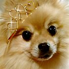 Princess Pomeranian by Tiffany Muff