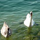 Proud Swan by Art-Motiva