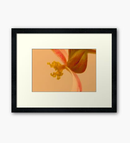 Rex Begonia Stamen Macro  Framed Print