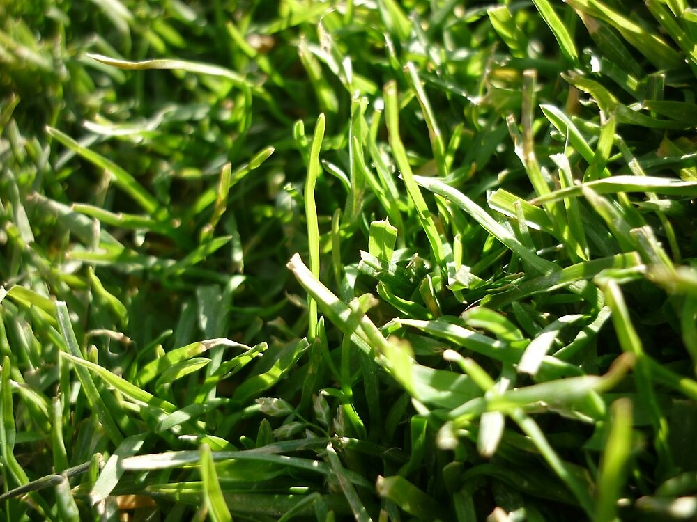 A Grassy Patch by Ben Wardropper