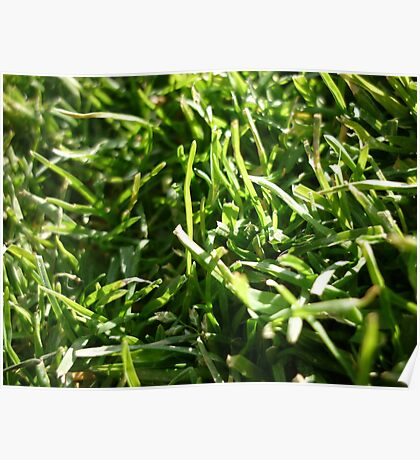 A Grassy Patch Poster