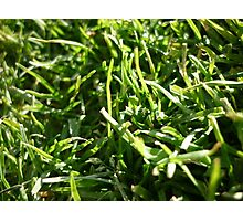 A Grassy Patch Photographic Print