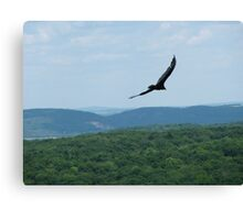 Soar With The Vultures Canvas Print