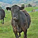 Montana Steer by lincolngraham