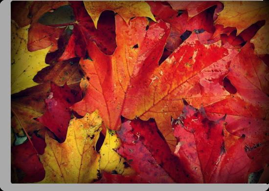 Autumn Colours by dawnandchris