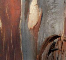 Bark Markings, Penguin, Tasmania, Australia. Sticker