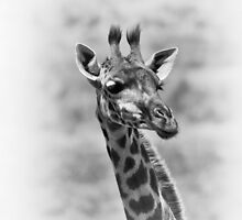 """""""Attentione"""" (B&W) by Andreas Koerner"""