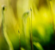 Deep into the moss by marina63