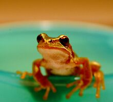 Hello Froggy by Tiffany Muff