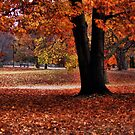 Wonderful fall by LudaNayvelt
