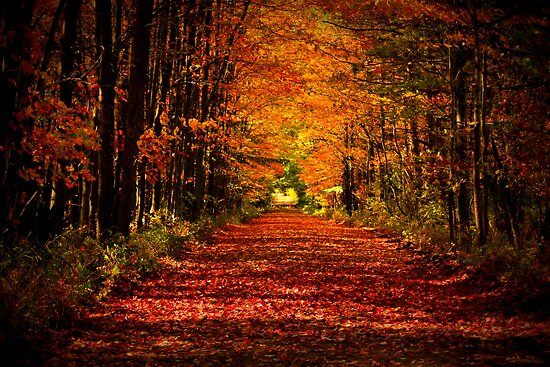 Colors of Fall-Custer MI by Chris Coates