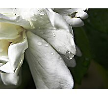 Drops of Sweetness Photographic Print