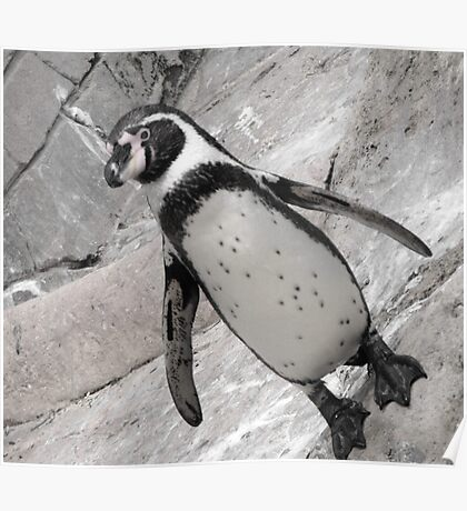 typical penguin Poster