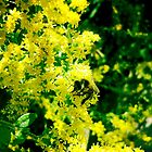 Inas Green Yellow Flowers by amaeye