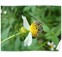 FLOWER WASP IN SPANISH NEEDLES Poster