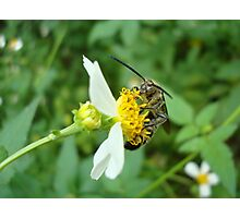 FLOWER WASP IN SPANISH NEEDLES Photographic Print