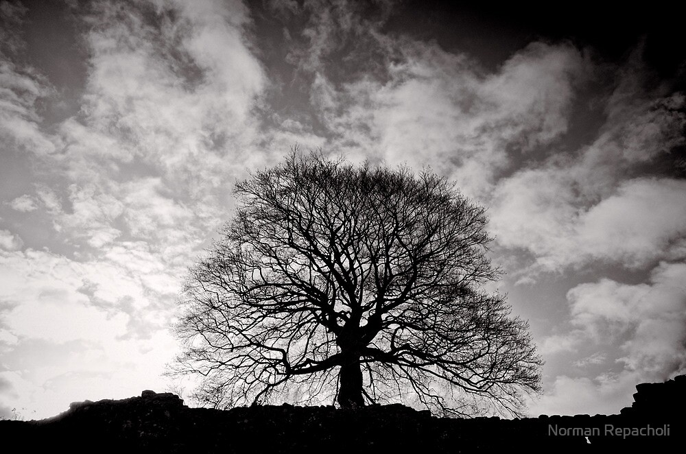 Tree of Triumph - landscape- Kenilworth - Great Britain by Norman Repacholi