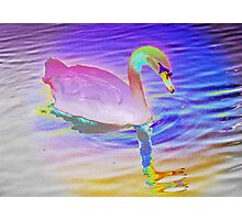 Swan mirror in pastels Photographic Print