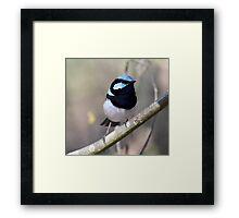 ~ Blue Wren ~ Framed Print