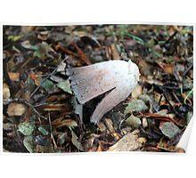 Mushroom Slant Poster