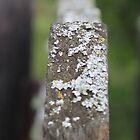 White Lichen by Kathi Arnell