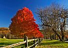 October Glory by cclaude