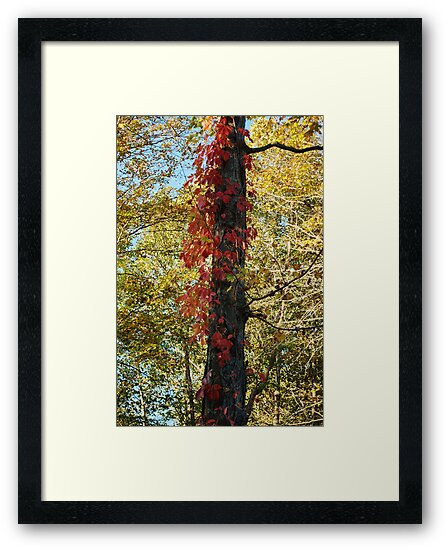 Red and yellow by Penny Rinker
