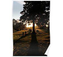 Morning Gravesite Poster