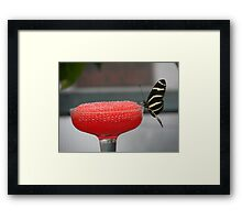 Black & Yellow Butterfly on Red Framed Print