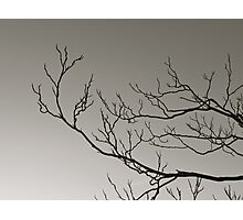 Alone in the Wind Photographic Print
