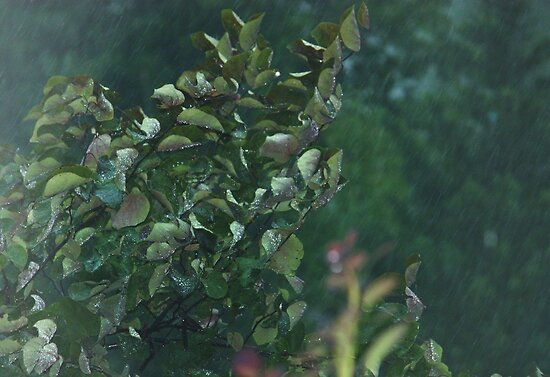 it's raining hard by ANNABEL   S. ALENTON