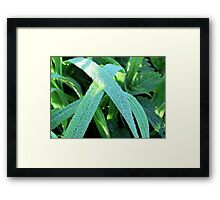 Drop by drop Framed Print
