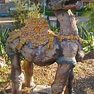 Humphrey the Camel by Penny Smith