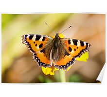 Perching Butterfly  Poster