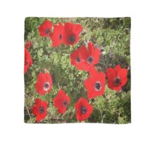 Red Wild Anemone Flowers  Scarf