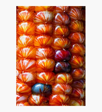 Ornamental Indian Maize Closeup Photographic Print